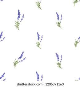 Floral seamless pattern with lavender. Vector watercolor vintage sketch. Botanical colorful illustration on white background. Pattern or card design.
