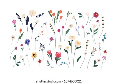 Floral set of beautiful blooming wildflowers and leaves. Botanical collection of cut meadow and garden flowers isolated on white. Elegant spring plants for floristry. Flat vector cartoon illustration