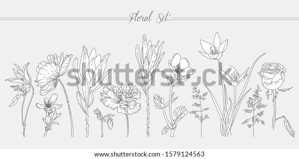 Floral Set Flowers Line Art Simple Stock Vector Royalty Free 1579124563