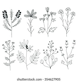 Floral Set. Hand drawn flowers on white background. Vector. Herbarium Set. Design elements for Wedding Invitations, Romantic Templates, Birthday Cards, Postcards, Patterns. Delicate Branches.
