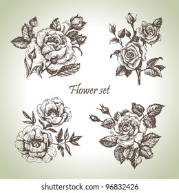 Floral set. Hand drawn illustrations of roses