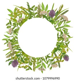Floral template with round frame, herb and field flowers in watercolor style. Greenery botanical composition with text place for invite, greeting, birthday card and covers.