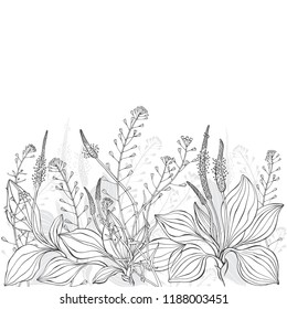 Floral vector background with shepherd's purse, plantain and  place for text on white. Invitation, greeting card or an element for your design.