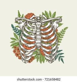 Floral vintage rib cage illustration. Floral anatomy. Vector illustration