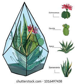 Florarium with different succulent. Glass house for tropical flowers