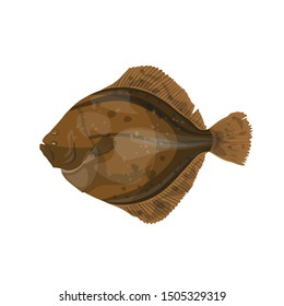Flounder fish image. Vector illustration isolated on white background
