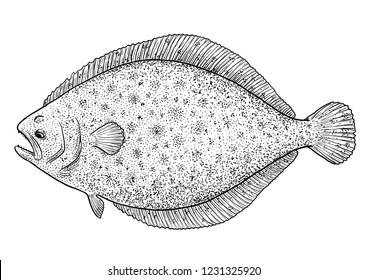 Flounder, flatfish illustration, drawing, engraving, ink, line art, vector