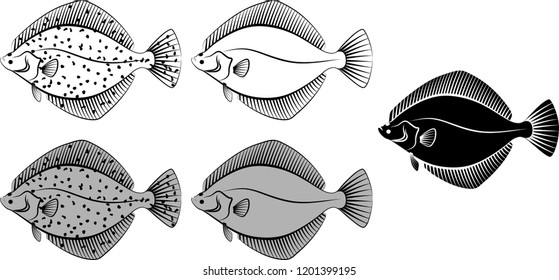 flounder - vector illustration