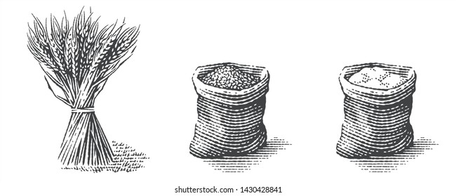 Flour and malt in burlap bag with sheaf  of dry wheat. Hand drawn engraving style
