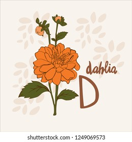 Flower alphabet. D- dahlia flower. Vector card.