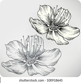 Flower apricots, hand-drawing. Vector illustration.