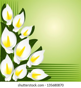Flower border with calla lilies