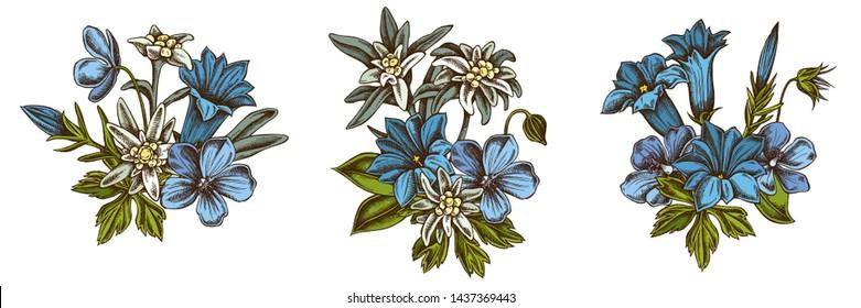 Flower bouquet of colored edelweiss, meadow geranium, gentiana