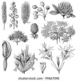 Flower collection / vintage illustration from Meyers Konversations-Lexikon 1897