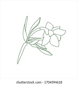 Flower -daffodil.Vector image.Illustration on white and color background.