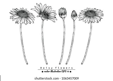 Flower drawings.  Daisy flowers by Hand drawn with line-art on white backgrounds. vector illustration.