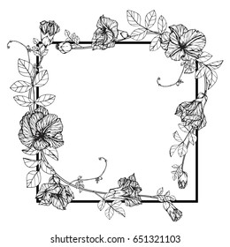 Flower frame of butterfly peas floral. Drawing and sketch with black and white line-art.