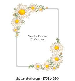 Flower frame. Frame with flowers of camomiles. Floral design. Vector color frame. Flat illustration of flowers.