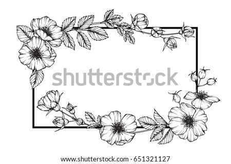 Flower Frame Rose Floral Drawing Sketch Stock Vector (Royalty Free ...