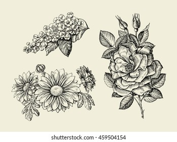 Flower. Hand drawn sketch dogrose, rosehip, wild rose, bird cherry, chrysanthemum. Vector illustration