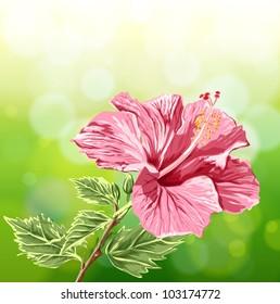 Flower Hibiscus on green background - vector illustration / Eps10