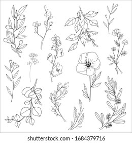 Flower and leaf hand draw sketch black and white with line art