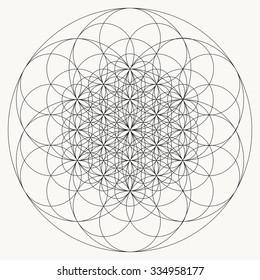 Flower of life mandala vector, geometric art, line drawing, sacred geometry