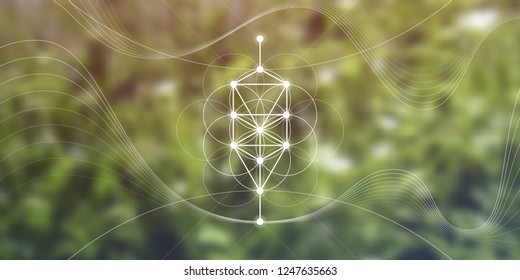 Kabbalah Tree Of Life Wallpaper / It usually consists of 10 nodes symbolizing different archetypes and 22 lines connecting the nodes.