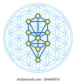 Flower of Life in Tree of Life. Sephirots of Kabbalah in ancient symmetrical symbol, composed of multiple overlapping circles, forming a flower like pattern. Sacred geometry. Illustration. Vector.