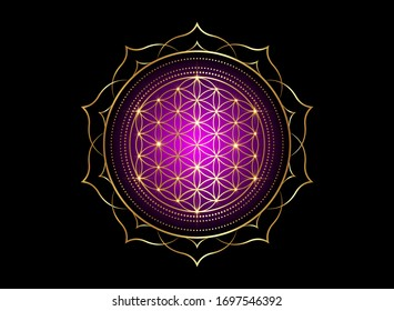 Flower of Life, Yantra Mandala in the lotus flower, Sacred Geometry. Bright golden symbol of harmony and balance. Mystical gold shiny talisman in purple color, vector isolated on black background