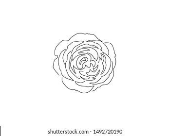Flower line drawing, vector illustration design. Nature collection.
