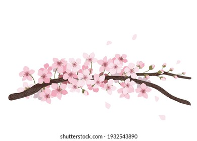 flower on white background Elements are isolated on a white background. Design for printing on cards, invitations