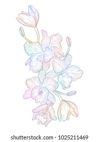 Flower Orchid isolated on white background. Vector illustration,