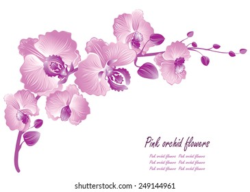 Flower orchid. Vector illustration