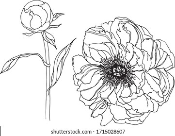 Flower peony set outline isolated element