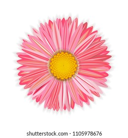 Flower pink gerbera. With a golden core and soft shadows. On the holiday card, banner. Congratulations. Isolated on white background. vector illustration.