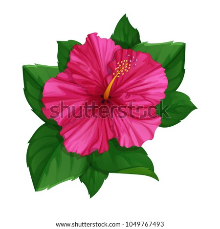 Flower Pink Hibiscus Leaves Tropical Plants Stock Vector Royalty