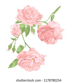 Flower pink rose, green leaves. Wedding concept. Floral poster, invite. Vector arrangements for greeting card or invitation design background.
