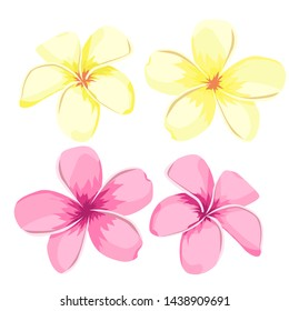 Flower Plumeria. illustration vector real style. Bouquet of exotic flowers.