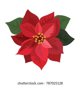 Flower poinsettia. Cartoon Christmas flower. Vector illustration of a blooming plant on a white background.