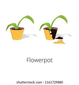 Flower Pot and Broken Flower Pot