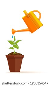 A flower in a pot is watered from a plastic watering can. Green houseplant in a pot. Young plant with watering can and water drops. Vector illustration isolated on white