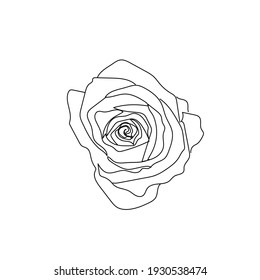 Flower rose in one line continuous style on white background