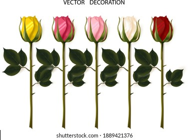 Flower rose, set of realistic buds isolated on white background. Roses are multi-colored. Collection of vector decorative design elements.