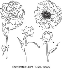Flower set clipart peony bloom