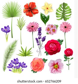 Flower set. Exoic, tropical, decorative plants and flowers. Vector realistic illustration EPS 10.