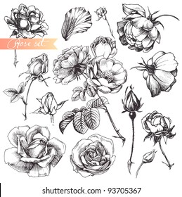 Flower set: highly detailed hand drawn roses.
