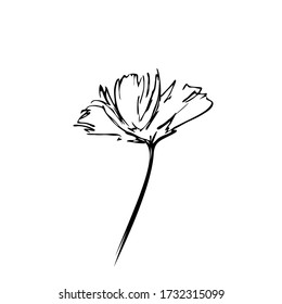 flower sketch black lines isolated on white background