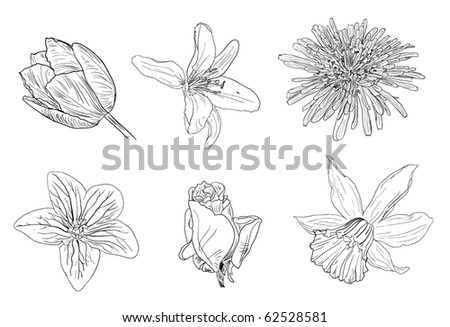 flower sketches stock vector royalty free 62528581 shutterstock