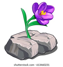 The flower sprouting through the cracked stone isolated on white background. Vector cartoon close-up illustration.